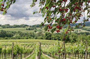 Pfalz - Reisetipps und Infos zu Sehenswürdigkeit für euren Urlaub findet ihr auf meinem Reiseblog gundi on tour