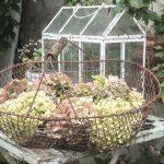 Herbstgarten im Shabby Chic - Tipps zur Deko findet ihr auf meinem Blog Gundi on Tour