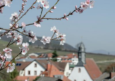 Pfälzer-Mandelblüte-3